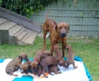 Gatto with his first litter