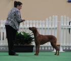 Grace at 2009 Adelaide Royal (where she won Runner-Up Best of Breed)