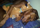 Tully (and Scooby!)